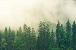 polish word spruce