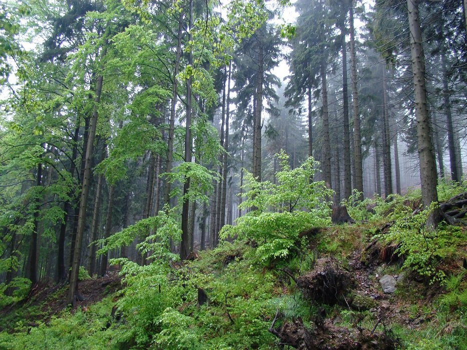 Visit Poland endless forests
